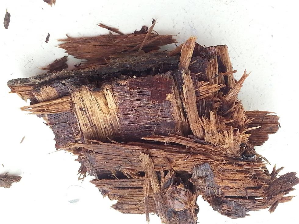 cadène 2 (bois pourri)