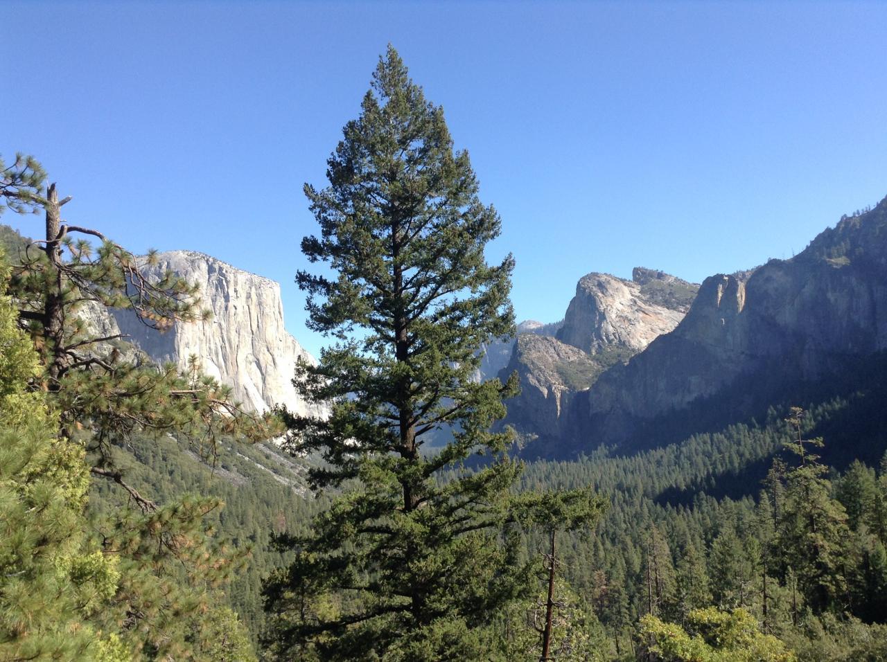 Yosemite Park : vue sur El Capitan