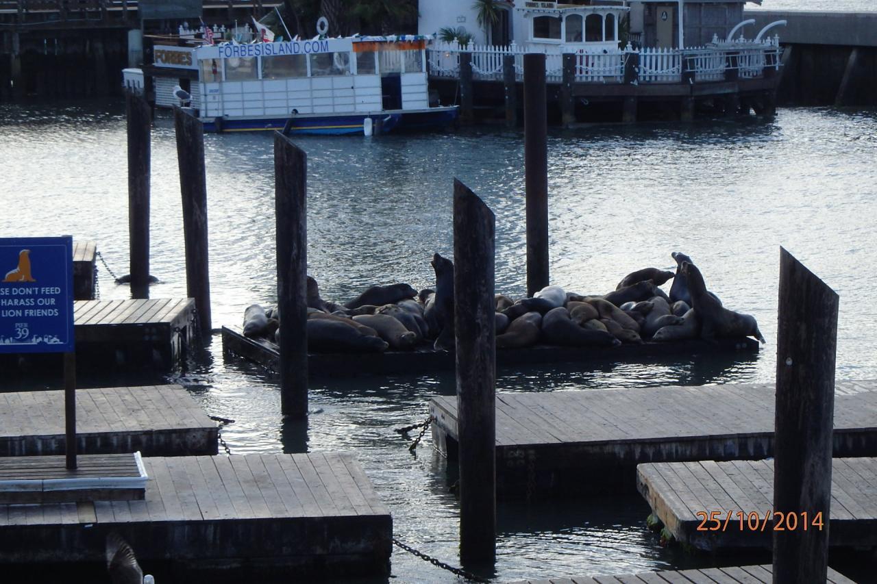 Otaries sur les jetées du port