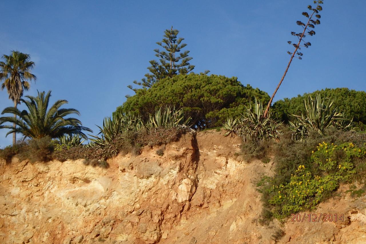 végétation sur la falaise