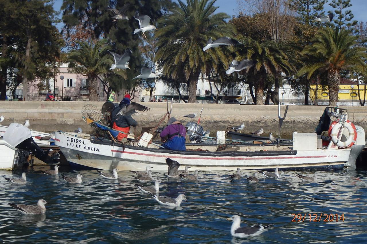Olhao : pêcheur au ponton