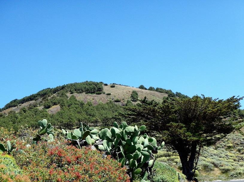 végétation 2