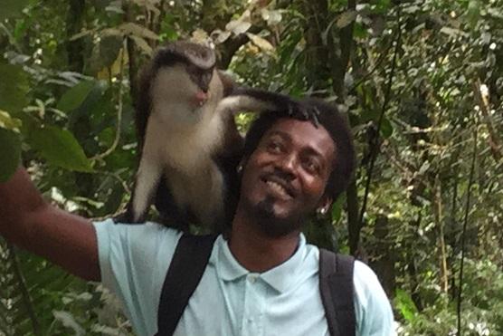 On attire les singes avec des bananes