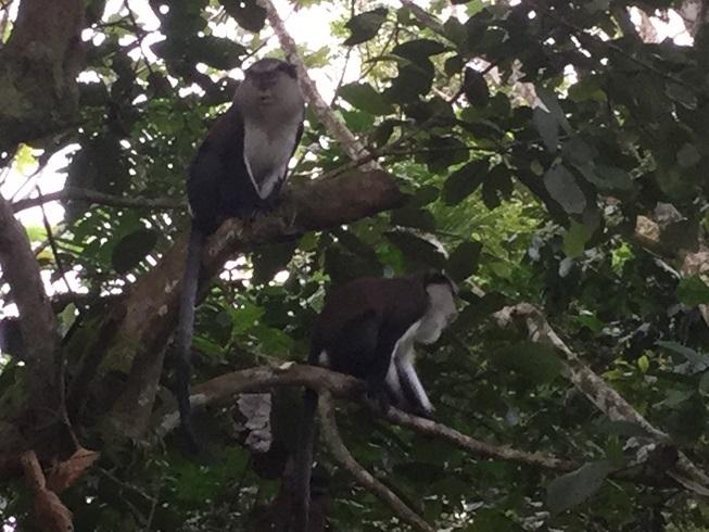 Petits singes sauvages (mais pas trop)