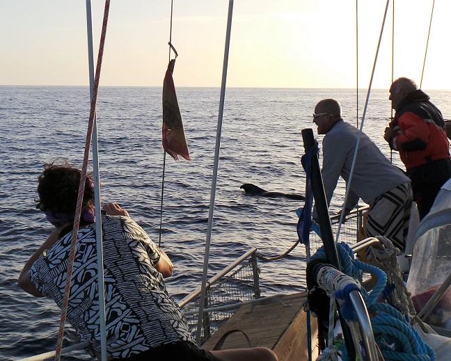 Baleines endormies à l'approche de Santa Cruz