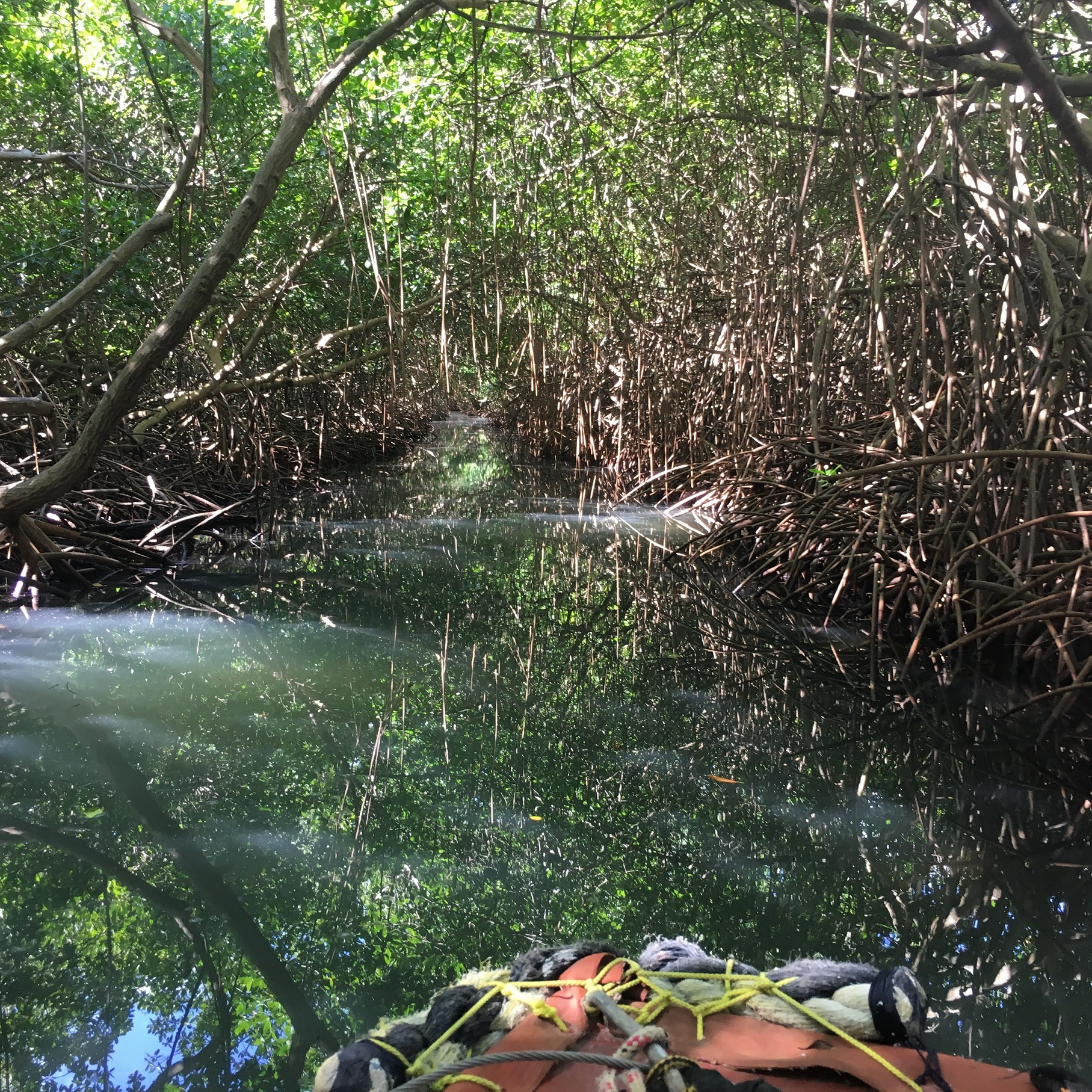 Le canal s'enfonce dans la mangrove