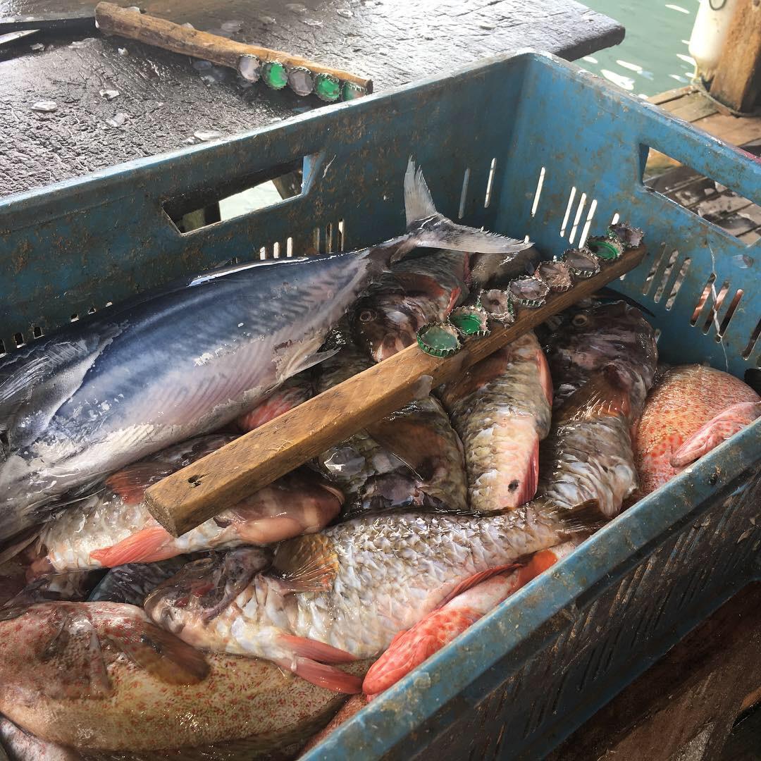 Un outil rudimentaire pour écailler les poissons